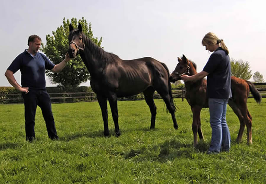 Julian and Anne Wilson with mare and foal at Grove Farm Stud, an established Thoroughbred Stud near Newmarket, Suffolk