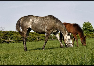 Grove Farm Stud photo mare and foal