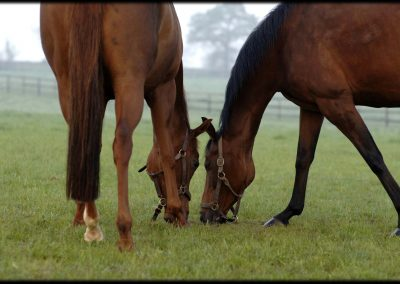 Grove Farm Stud photo