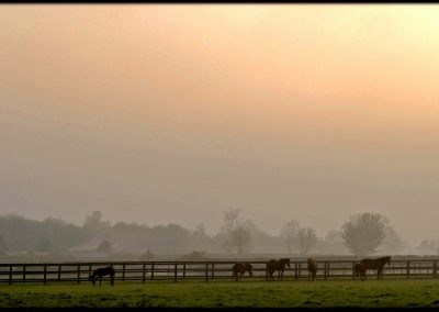 paddocks with thoroughbreds