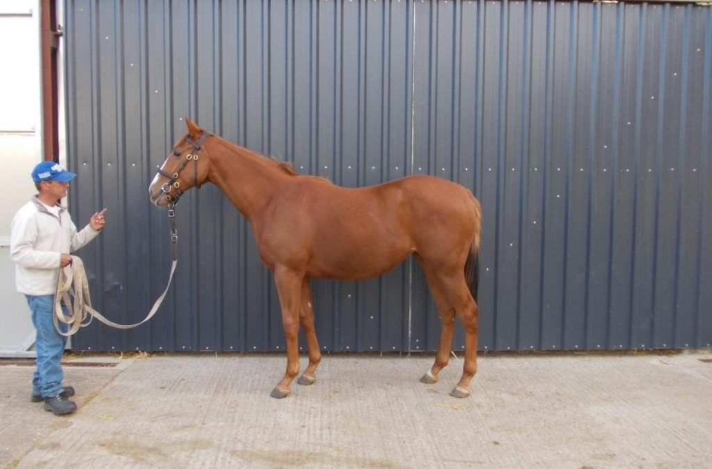 Yearling Filly By Champ Elysees ex. Fittonia