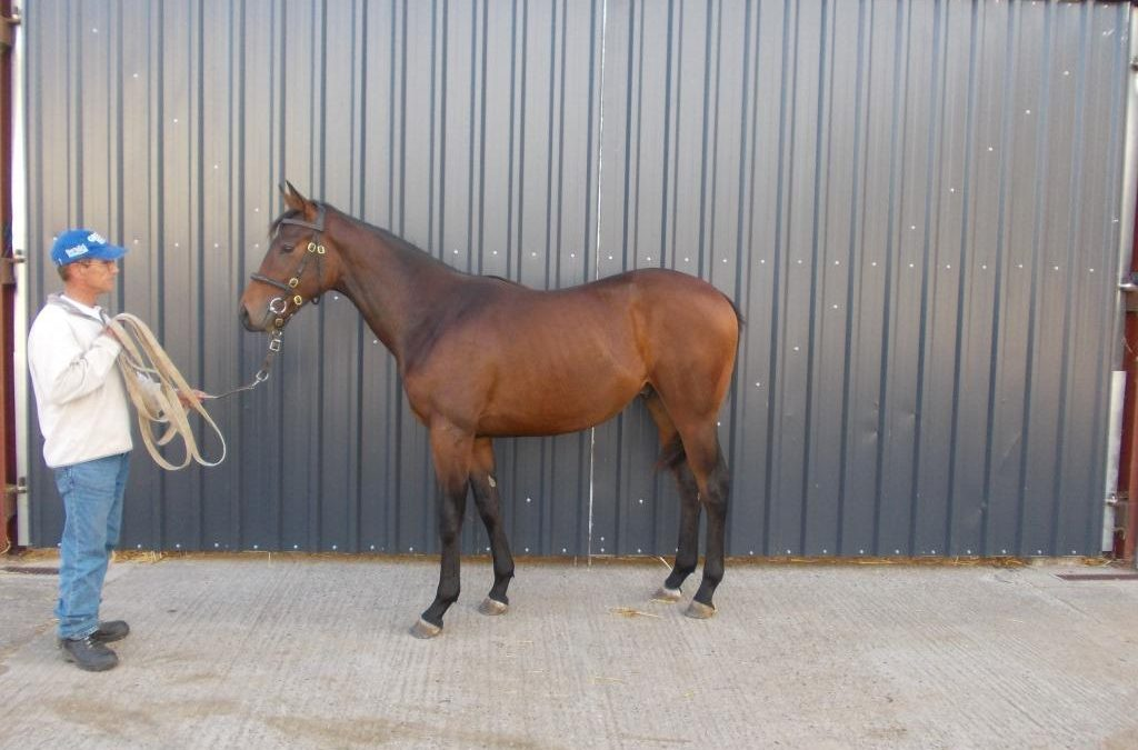 Lot 1644 for sale by Grove Farm Stud